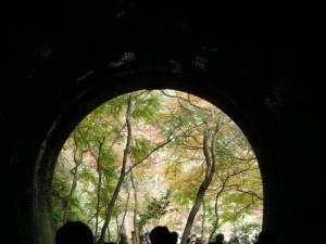 愛岐トンネル群、4号トンネル多治見側のモミジ
